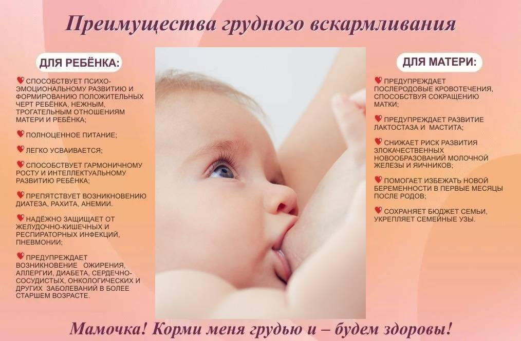 Грудное вскармливание новорожденных: как правильно наладить процесс