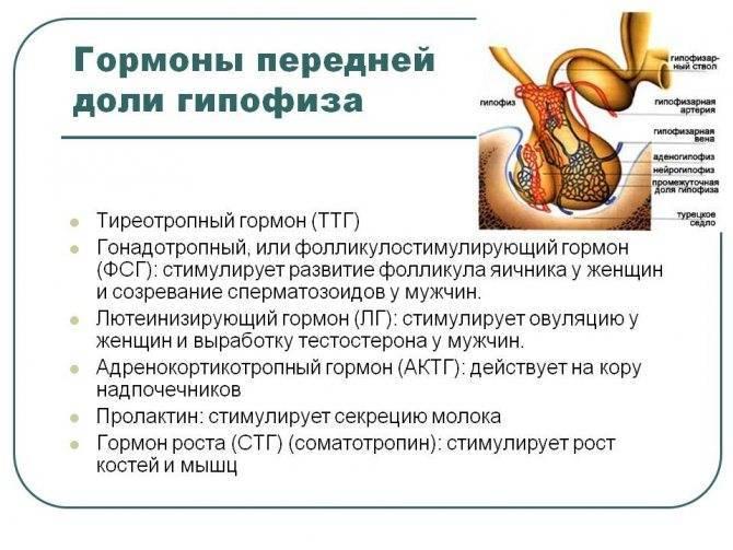 Мономерный пролактин - что это такое, какова его норма в организме