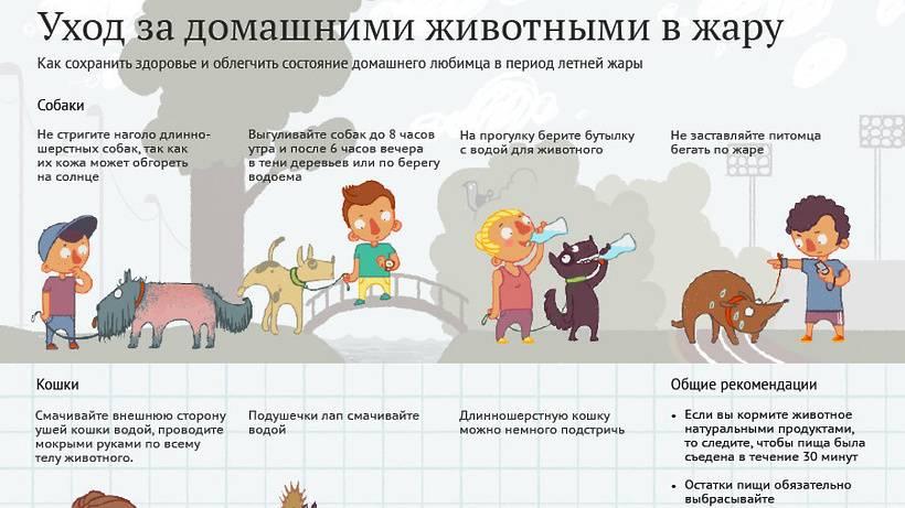 Какое животное выбрать для ребенка по возрасту