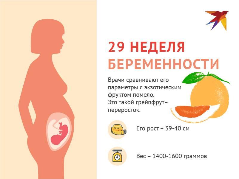 8 неделя беременности: что происходит с малышом и мамой