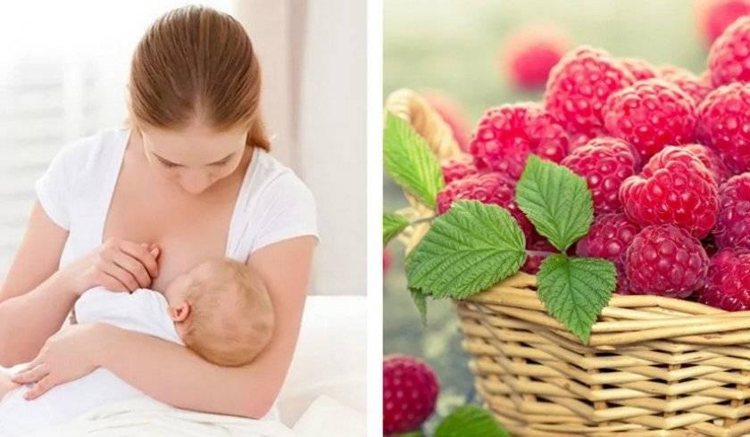 Можно ли кормящей маме есть чернику: все «за и против» ягоды при грудном вскармливании. можно ли кормящей маме чернику? черничный морс при грудном вскармливании