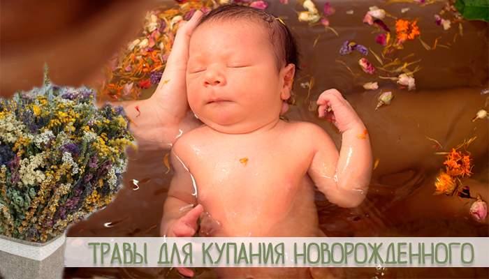 Травы для купания новорожденных: череда и ромашка