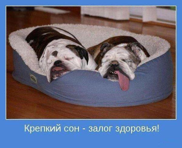На каком боку лучше спать для здоровья - вся правда
