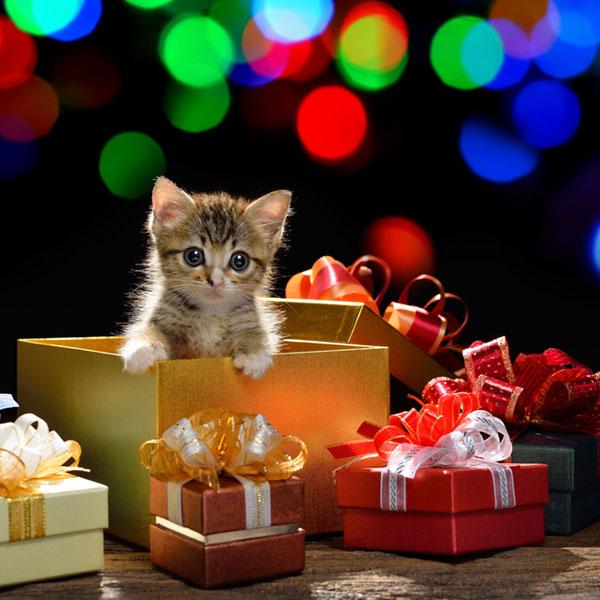 Кому и почему не стоит дарить котенка? | муркотики