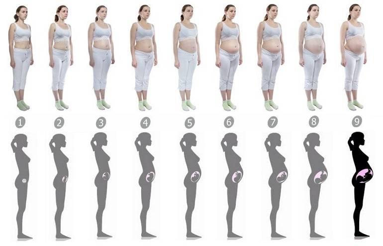 Матка при беременности на ранних сроках: размер, форма, возможные проблемы / mama66.ru
