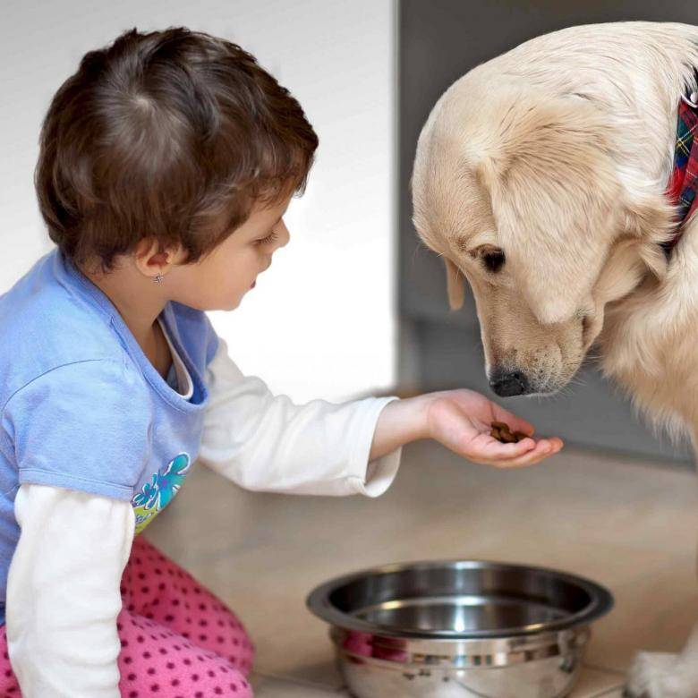 Питомец для ребенка: правила выбора и советы по уходу. выбор питомца по характеру человека