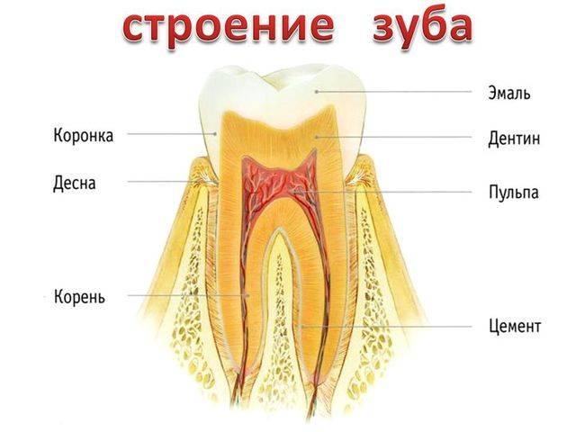 У ребенка болит зуб: чем обезболить и снять зубную боль в домашних условиях, обезболивающие