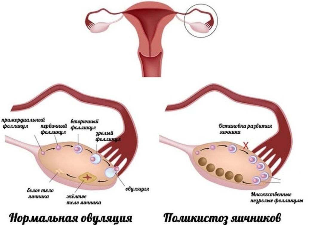 Выделения после овуляции если зачатие произошло: какие должны быть при наступлении беременности