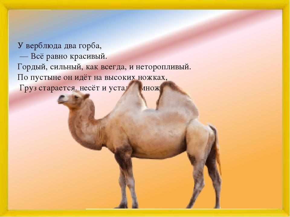 Почему верблюд горбатый? причины, фото и видео