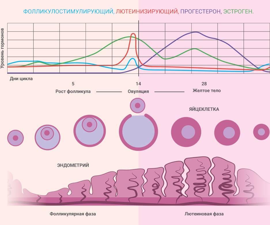 10 способов повысить прогестерон естественным способом