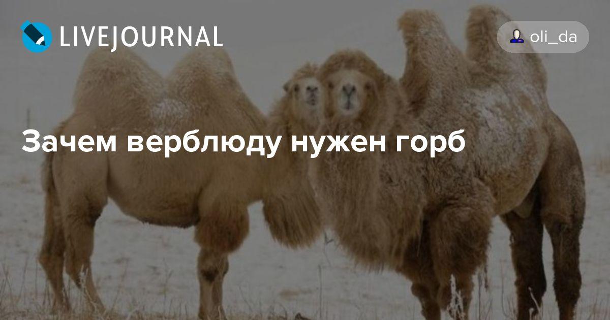 Киплинг от чего у верблюда горб краткое содержание 5-6 предложений