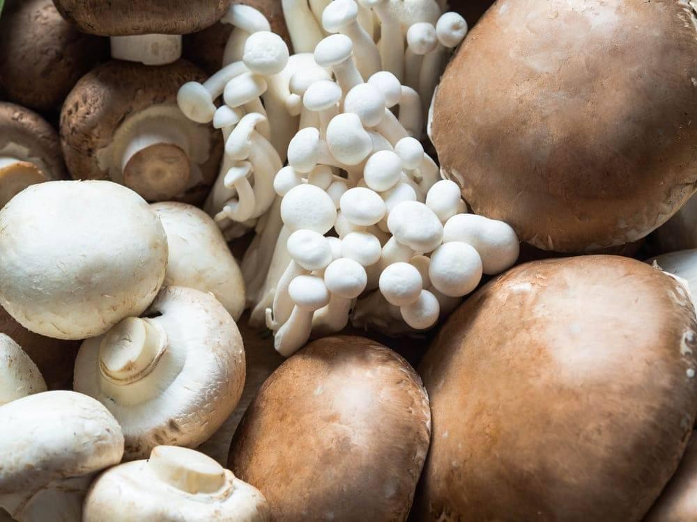 Шампиньоны при грудном вскармливании: можно ли их употреблять маме в первый и последующие месяцы после родов, а также каковы польза и вред этих грибов при гв?