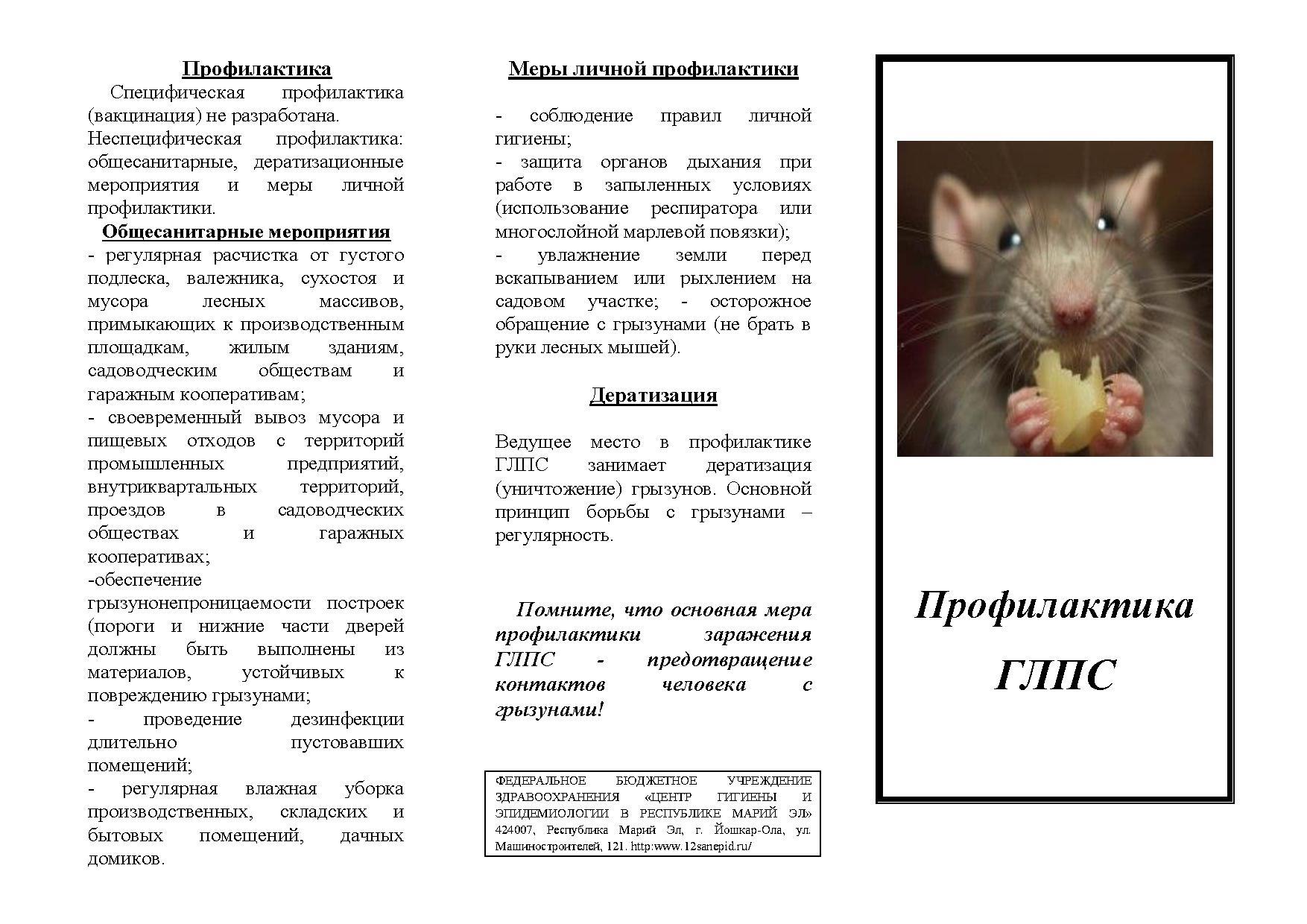 Как проявляется мышиная лихорадка у детей: признаки, симптомы и лечение