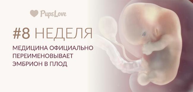 Узи на 8 неделе беременности (20 фото): размер плода и нормы малого таза, что показывает узи на 8 акушерской неделе, особенности у двойни