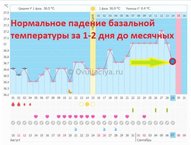 Базальная температура перед месячными (график): за неделю до менструации