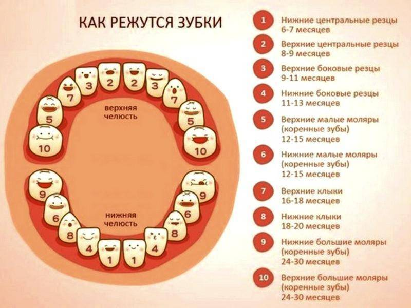Симптомы прорезывания зубов у детей после года - общие признаки