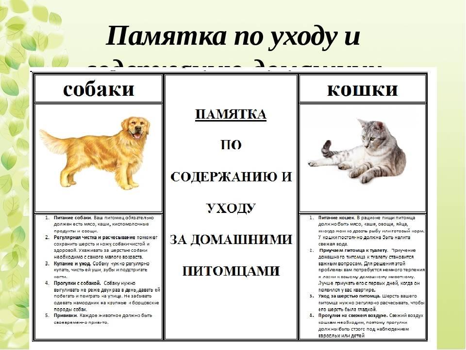 Советы по уходу за собакой для детей