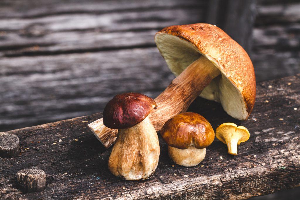 Можно ли грибы при грудном вскармливании: польза и вред шампиньонов, вешенок, белых грибов и лисичек при кормлении грудью