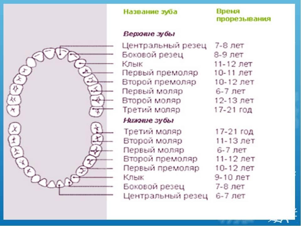 Температура при прорезывании зубов у детей: сколько дней держится, допустимая высокая температура, может ли быть 39