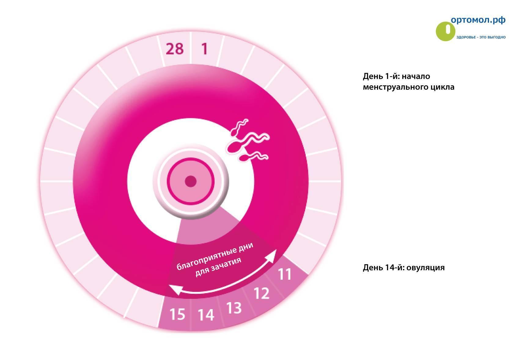 В какие дни можно забеременеть и как рассчитать период овуляции для зачатия ребенка