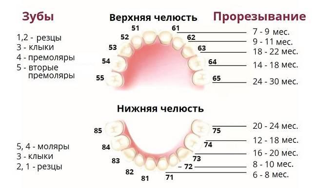 График прорезывания зубов у детей, схема прорезывания, способы облегчения боли и описание возможных нарушений процесса