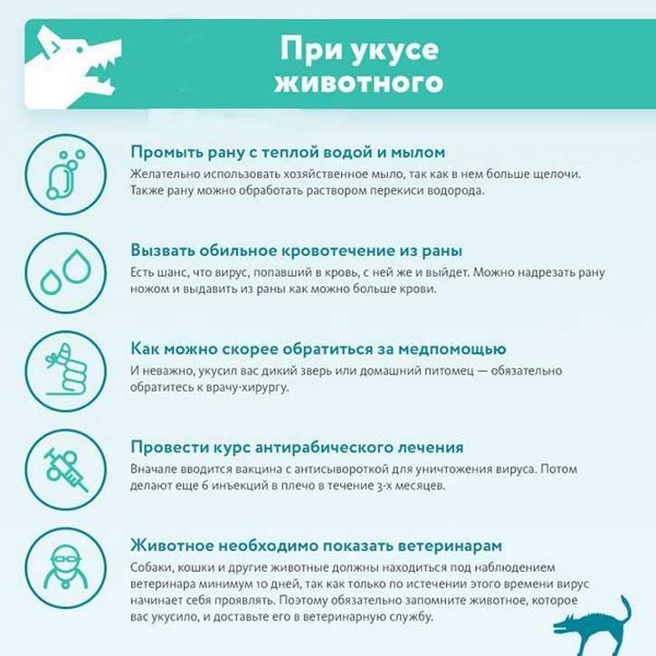 Обязательно ли обращаться в больницу и к каким врачам, когда укусил пес