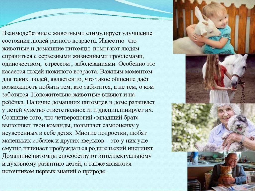 домашние животные для детей: список, описание, полезные игры