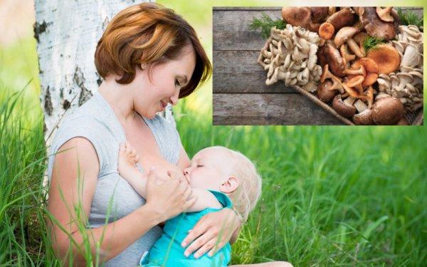 Можно ли кормящей маме есть грибы: польза и вред шампиньонов, маринованных и жареных грибочков при лактации. можно ли кормящей маме шампиньоны?