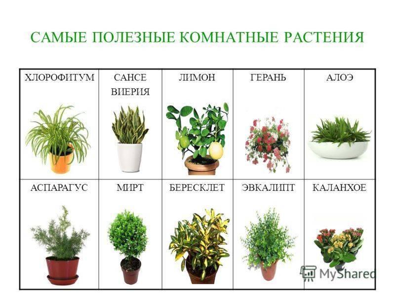 Цветы для детской комнаты, растения которые безопасны для детей