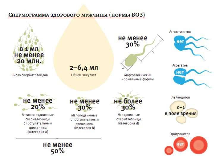 Кровь в сперме: причины, лечение, профилактика
