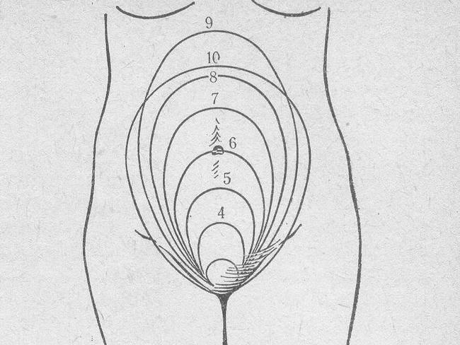 Матка при беременности - положение, размер, на ощупь мягкая или твердая
