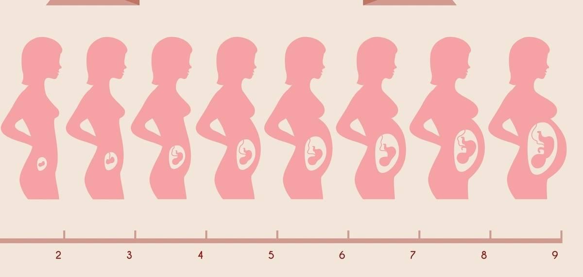 Таинство зарождения жизни — зачатие, оплодотворение, беременность