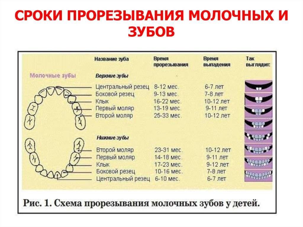 Как помочь ребёнку, когда режутся зубки? первые зубы крохи