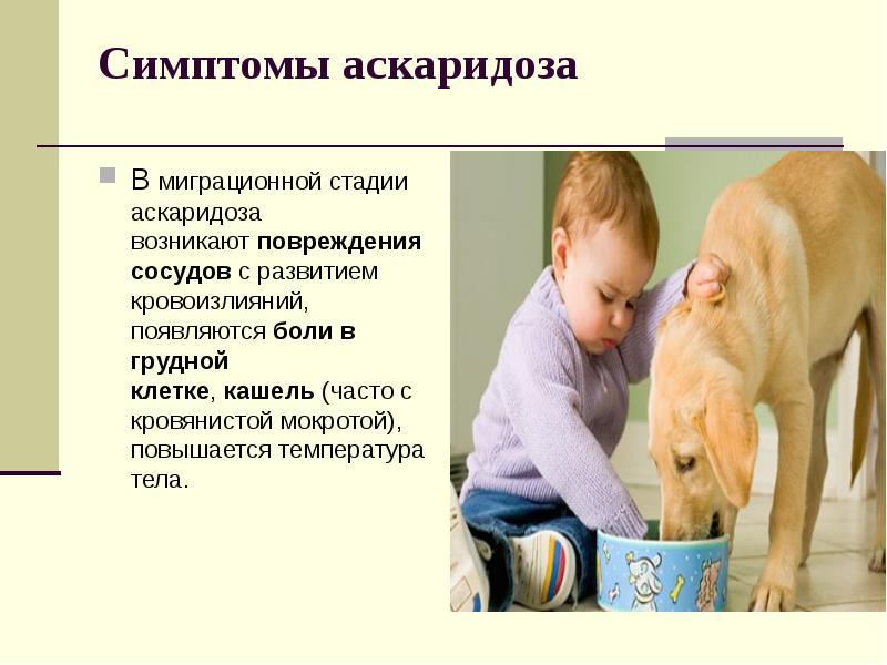 Аскариды у детей симптомы и лечение комаровский - masldomcul.ru