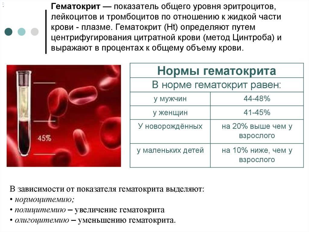 Анализ крови при беременности: нормы, причины – лейкоциты повышены, пониженная мочевина, есть эритроциты, нейтрофилы или понижены лимфоциты, расшифровка на ранних сроках