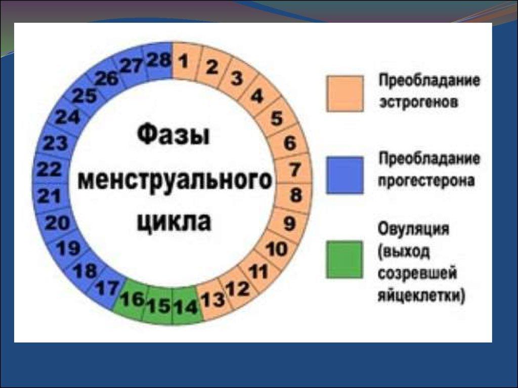 Как рассчитать овуляцию и дни фертильности?