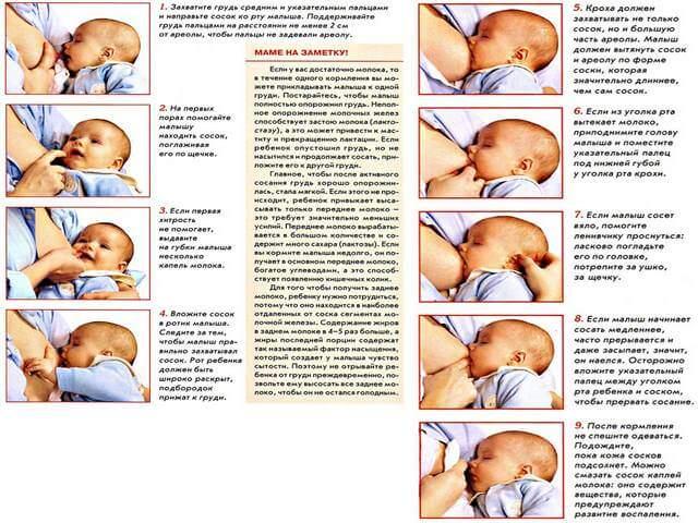Как правильно кормить малышей грудью: рекомендации воз