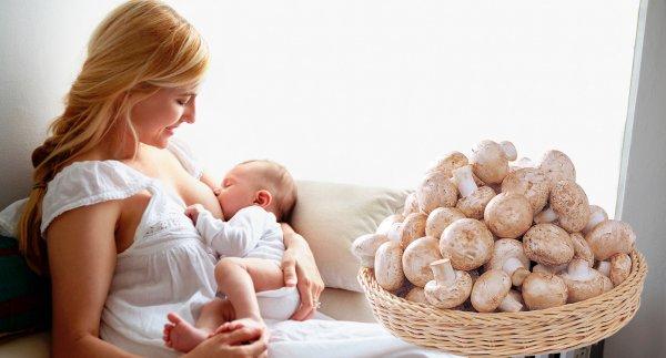 Можно ли грибы при грудном вскармливании: белые, шампиньоны, лисички и другие