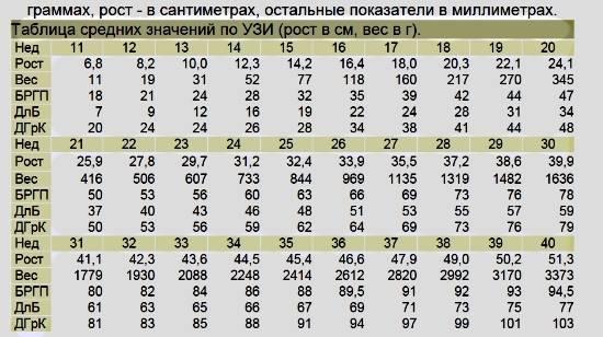 Особенности ультразвуковой фетометрии плода: таблицы основных показателей по неделям