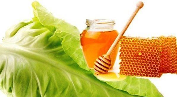 Капустный лист с мёдом при кашле: как приготовить компресс, противопоказания и правила применения для ребёнка