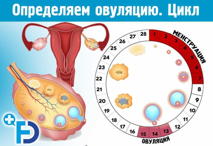 12 женщин, которые забеременели во время беременности (и 2 способа, как это может произойти)
