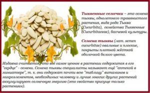 Тыквенные семечки при беременности : польза и вред | компетентно о здоровье на ilive