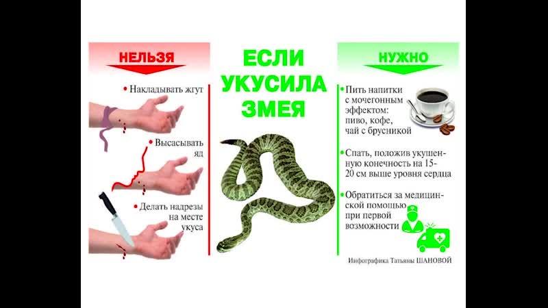 Первая помощь при укусе змеи: что нужно делать, а чего нельзя