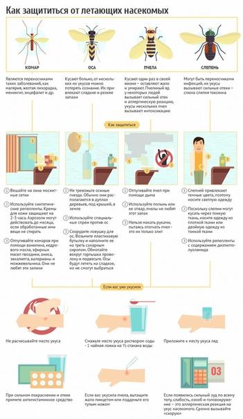 Укус пчелы: первая помощь в домашних условиях | lisa.ru