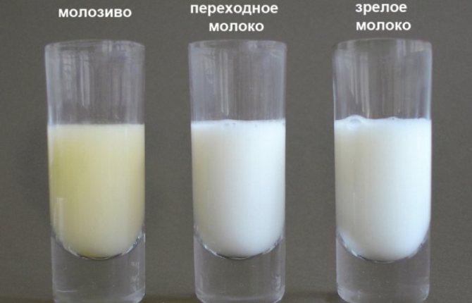 Когда появляется молоко или молозиво у беременных, на каком месяце до родов ждать появления