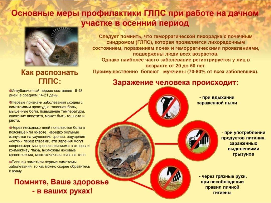 Мышиная лихорадка - симптомы и признаки болезни, лечение у взрослого и ребенка, последствия и профилактика заражения