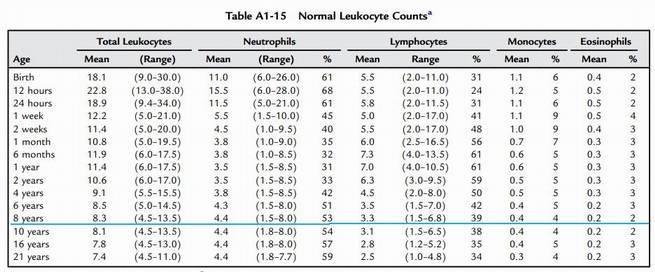 Что такое лимфоциты в анализе крови, норма и отклонения