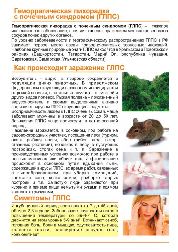 Симптомы мышиной лихорадки у подростка. мышиная лихорадка у взрослых: пути заражения, симптомы, стадии. лечение и диагностика мышиной лихорадки