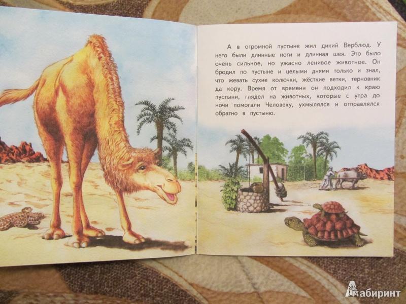 Зачем горбы верблюду. как объяснить ребенку 3-5 лет зачем верблюду горбы