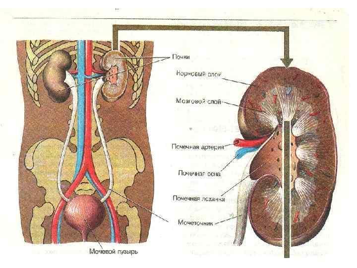 Заболевания почек и мочевыводящих путей у детей - симптомы и лечение